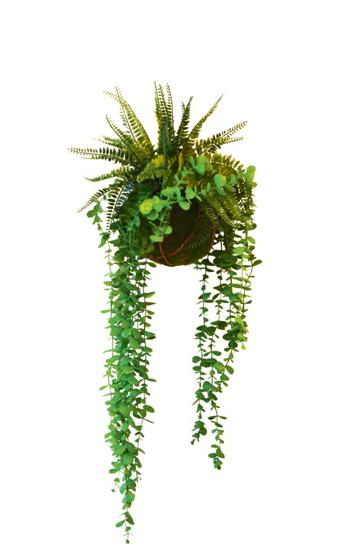 Afbeeldingen van Fougeres Eucalyptus - kunstplanten met stalen hanger 50 cm