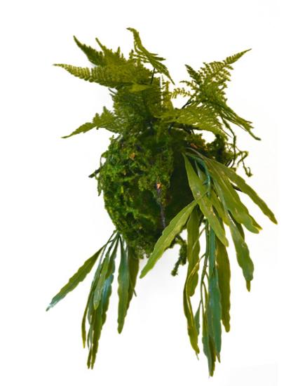 Afbeeldingen van Rhipsalis Fougeres - kunstplanten met stalen hanger 50 cm
